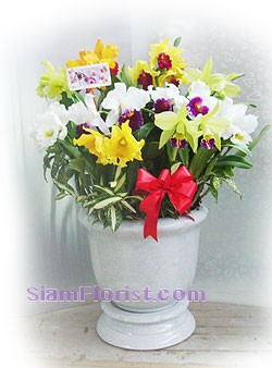 7003  Orchid Plants in Basket