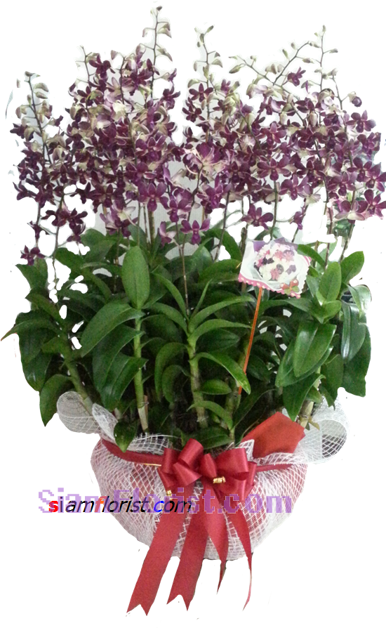 2366 Pot of Orchids Plants  click for detail