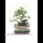 01802TG  Tray Garden - Bon Sai